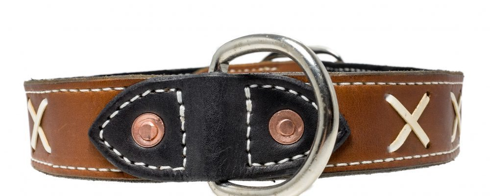 Dog Collar & Leash Set